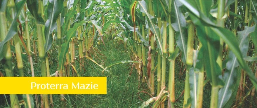 Proterra Maize with Name in box